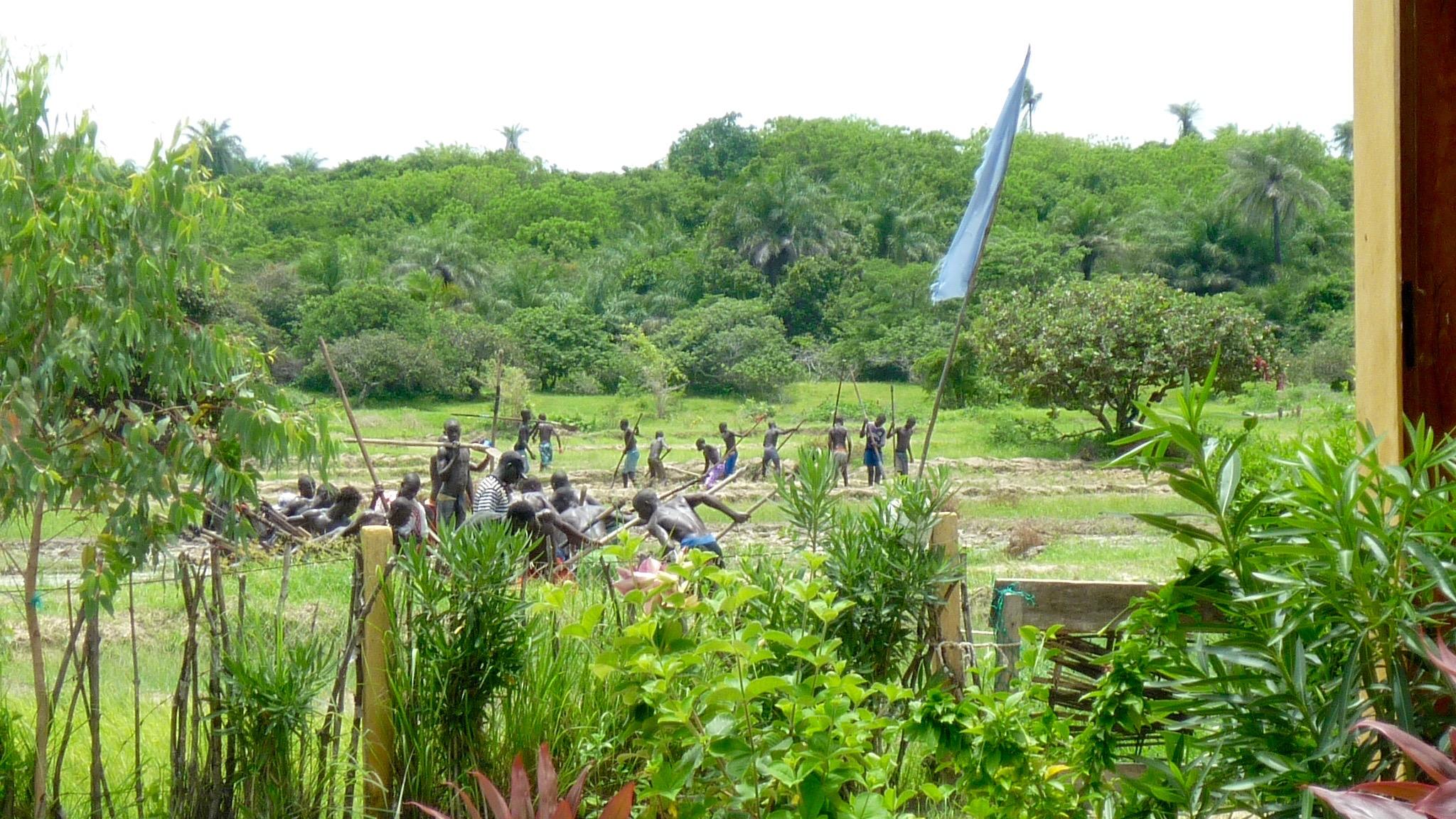 Les hommes dans les rizières