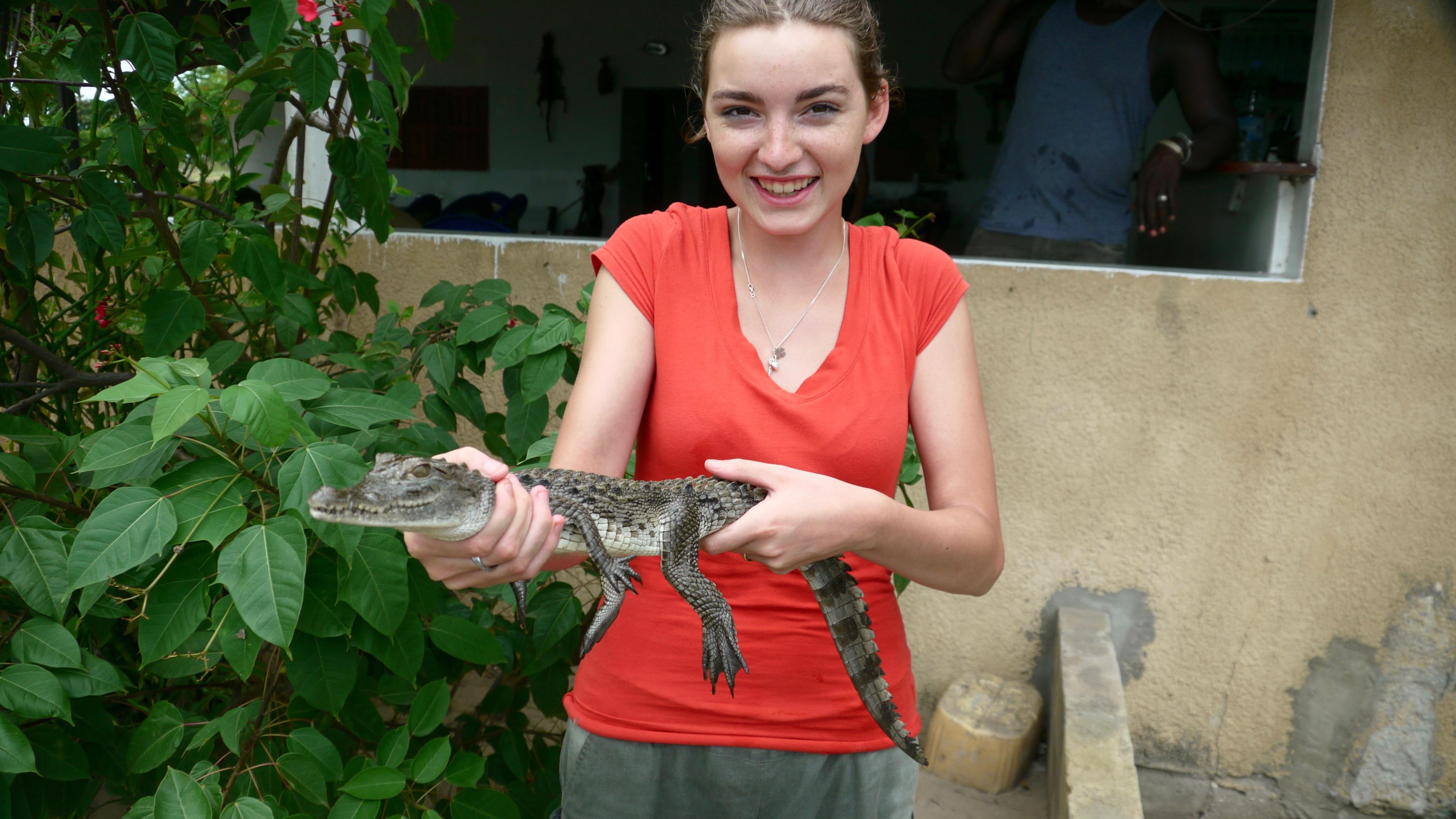 Crocodile dans les îles