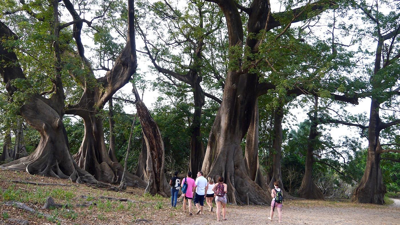 Forêt de Baobabs