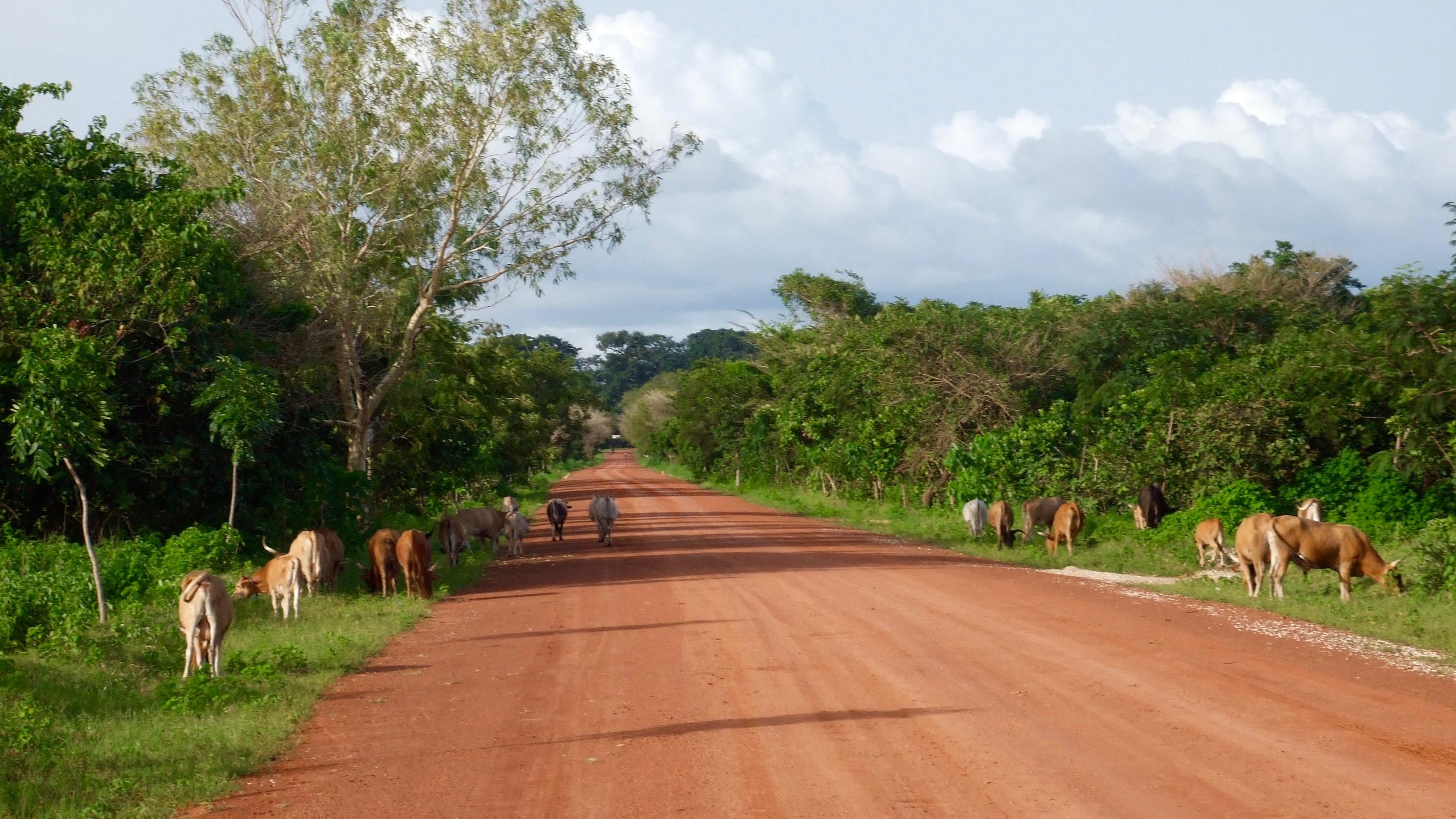 Paysage de Casamance